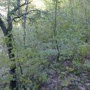 2011-04_Sedlo_zaraslo 2