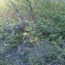2011-04_Sedlo_zaraslo 1
