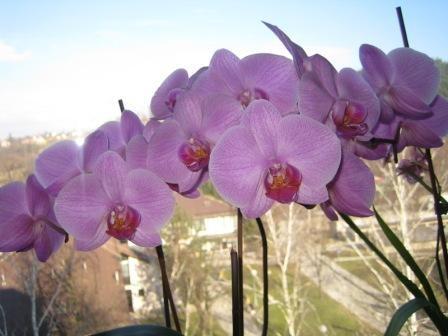 Pogled skozi cvetove orhideje na kuhinjskem oknu na zdravstveni dom.