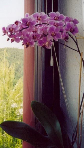 Cvetenje 2003