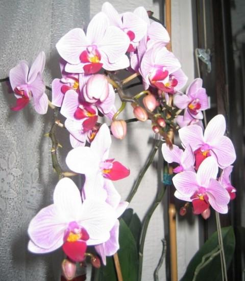 Cvetenje 2005