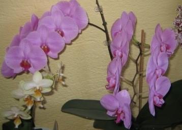 Orhideje in rože - foto