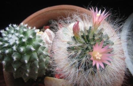 Avgust 2007 - spet cveti