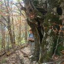 Drvo i Mirna