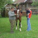 Konj na obisku...