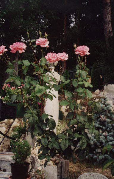 Rožce - foto