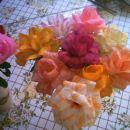 dvobarvne vrtnice