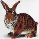 tapraw zajc