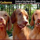lepi psi