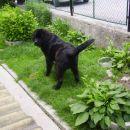 Na domacem vrtu je lulanje najslajse ;)