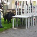 Pa ne pod mizo no... jaz ne pridem vec spodaj ;)