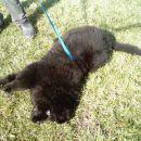 uau, kako je lušno v travi ::))