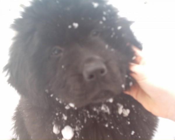 Uživam v snegu ×D