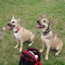 Tisa in njen bratec Zeus.