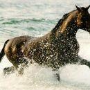 Ihaaaa prek voda. En ful lepi konj