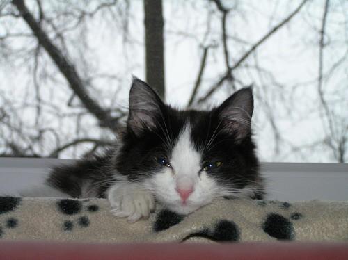 Lilika - foto