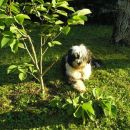 ponosno poziranje ob premagani magnoliji