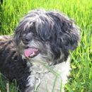 Mika, dolgodlaka, sterilizirana, prijazkana, stara 4,5 leta ODDANA