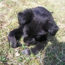 Samica, 3 mesece, Velenje (4103)