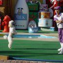 najbolj zanimiv šov kar sem jih videla, kdo bi verjel da lahko mačko naučiš trikov o psih
