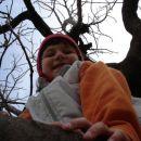na drevesu