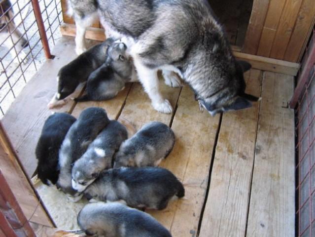 NOVO LEGLO 26.3.2007 - foto