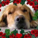 Rondo med vrtnicami!!