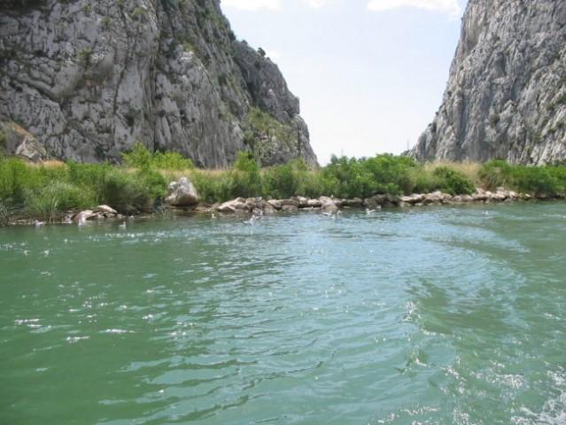 Kanjon reke Cetine. Zelo čista sladka voda in obilo postrvi.