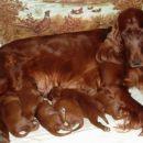 mama Liza in njeni mladiči mar.2006