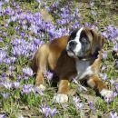 Pomlad v Tivoliju