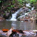 Potok Medvednice