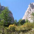 Alpski cvjetnjak