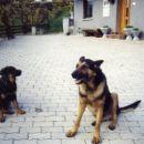 Rex(mladiček) in Nero