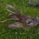 117 pik, uplenil gost v našem lovišču