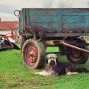 Biba na kmetiji z Lumpo