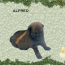 ALFRED star 1 mesec