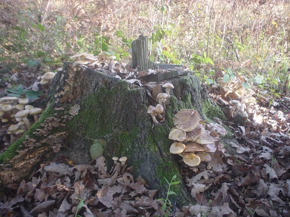 Nepoznate gljive - foto povečava