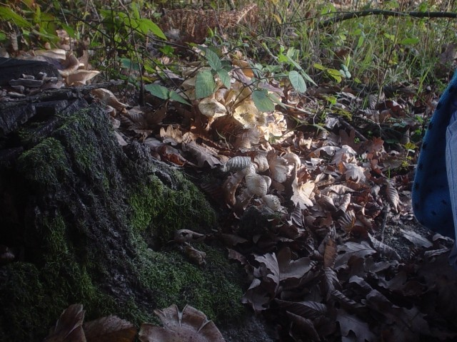Nepoznate gljive - foto