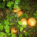 Nema ssta po mojoj procjeni ova godina je bass Jako rodna za gljive 21.08.2006 moje sjeve