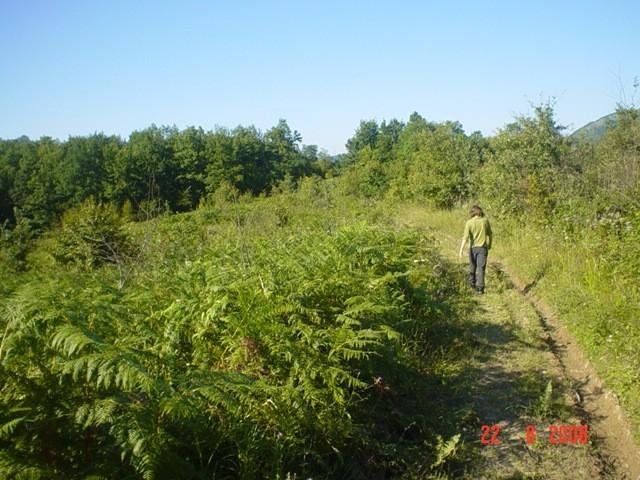 Obratiti pazznju na ssumnarak sa desne strane desetak stabala medju njima dva prava ljepot
