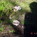 Kako ove smrde fuj 22.08.2006 Sjeverno od mene ssume