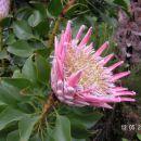 V notranjosti rastlinjaka