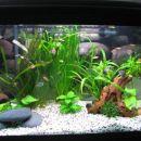 tako pa zgleda akvarij po 3 mesecih...