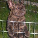 moj medvedek Hugo