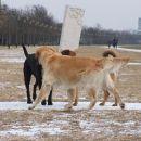Zimska šetnja