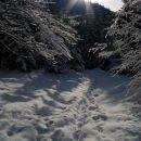 Pot gre varno tudi skozi gozd...