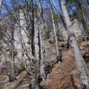 Po gozdnem pobočju zopet navzgor, na vrh...