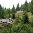 V zaraščanju... Planina Berebica...