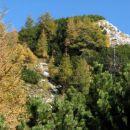 Macesnovčev vrh...