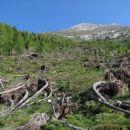 Podrto drevje nad lovsko kočo ...